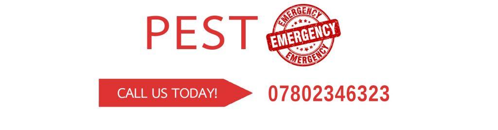 Got pest problems? Call Pestalance today - 07802346323